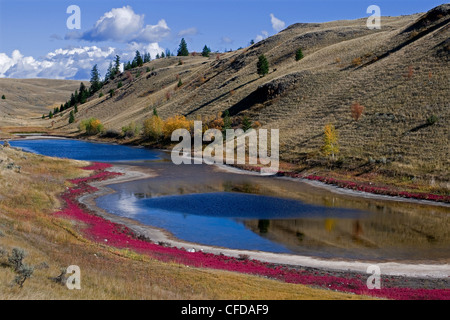 A red bloom surrounds a lake in the fall, near Kamloops, British Columbia, Thompson Okanagan region, Canada - Stock Photo