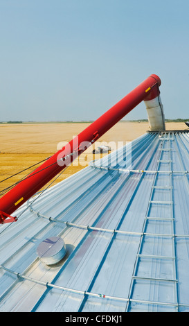 Grain storage bin and auger with combine harvesting wheat in the background, near Lorette, Manitoba, Canada - Stock Photo