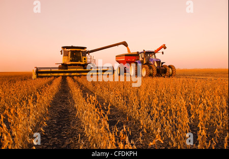 A combine empties into a grain wagon on the go during the soybean harvest, near Lorette, Manitoba, Canada - Stock Photo