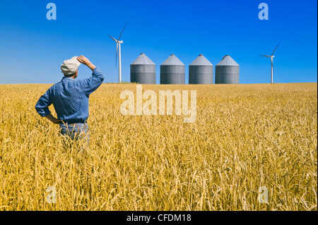 A man looks out over a mature spring wheat field with grain bins(silos) and wind turbines, near St. Leon, Manitoba, - Stock Photo