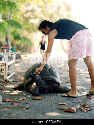 Tourist petting 28 year old turtle on the promenade at Anse Banane, eastern La Digue, La Digue and Inner Islands, - Stock Photo