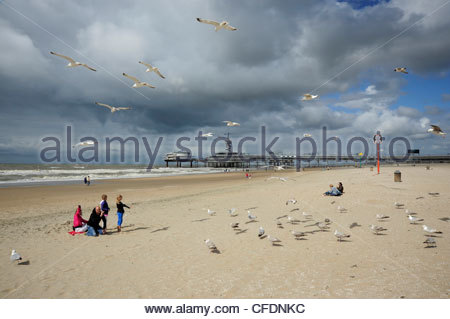 People and seagulls on the beach, Scheveningen pier in the background, The Hague, Den Haag, Dutch North Sea coast, - Stock Photo