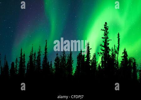Aurora borealis (northern lights), boreal forest, Yellowknife environs, Northwest Territories, Canada - Stock Photo