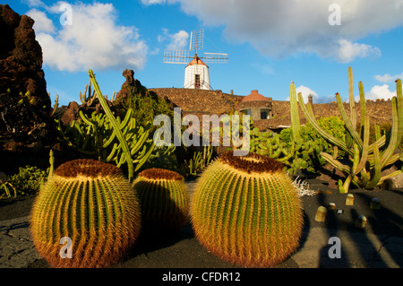 Lanzarote, Canary Islands - the Cactus Garden at Guatiza ...