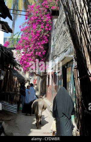 Narrow alley, Old Town, UNESCO World Heritage Site, Lamu Island, Kenya, East Africa, Africa - Stock Photo