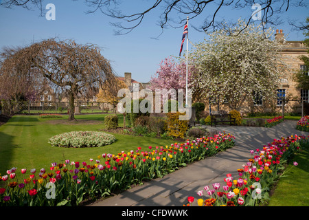 Masses of colourful spring tulips in the Bath Gardens , Bakewell, Derbyshire, Peak District National Park, England, - Stock Photo