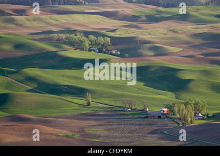 Rolling hills, The Palouse, Whitman County, Washington State, United States of America, - Stock Photo