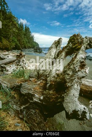 Juan De fuca trail on Vancouver island British Colombia - Stock Photo