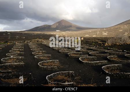 Vineyards in 'La Geria' - Lanzarote, Canary Islands - Stock Photo