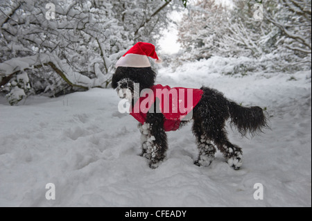 A small black dog wearing a Santa hat and jacket in the snow. Hastings. East Sussex. UK - Stock Photo