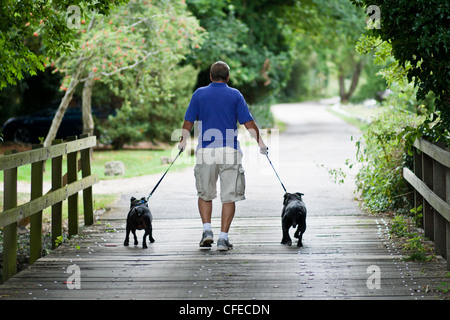 A man walking two staffordshire bull terriers on a countryside track - Stock Photo
