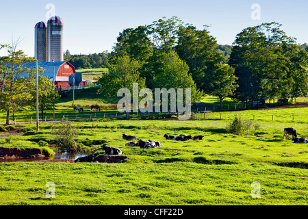 Dairy cattle and old barns, Nova Scotia, Canada - Stock Photo