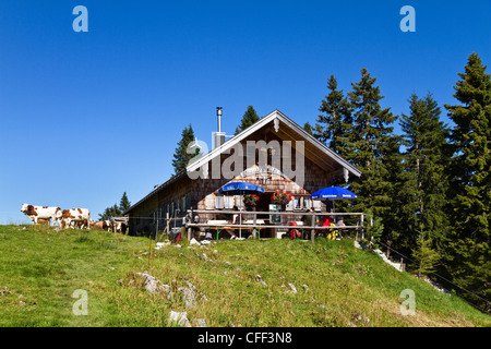 Mountain hut Sonnbergalm with cows in the sunlight, Mangfall mountains, Upper Bavaria, Germany, Europe - Stock Photo