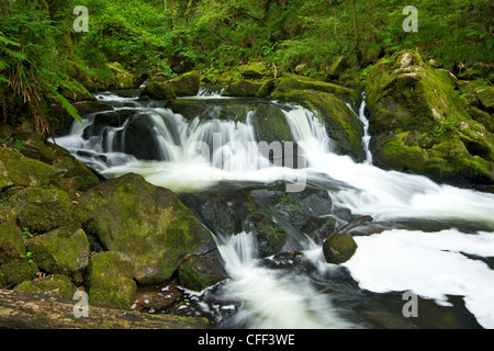 River Fowey at Golitha Falls National Nature Reserve, sessile oak woodland, Bodmin Moor, Cornwall, England, United - Stock Photo
