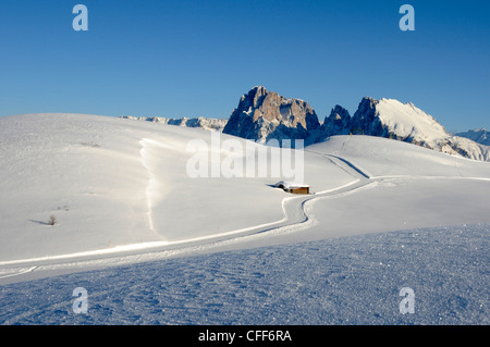 Cross country skiing trail in sunlit winter landscape, Alpe di Siusi, Puflatsch, Alto Adige, South Tyrol, Italy, - Stock Photo