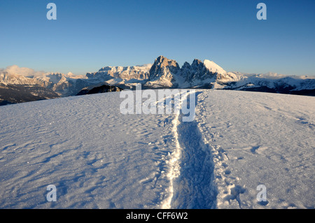 Traces in snowy mountain landscape in the evening sun, Alpe di Siusi, Langkofel, Alto Adige, South Tyrol, Italy, - Stock Photo