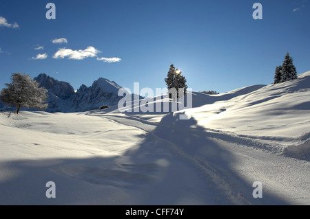 Winter landscape with cross country skiing trail in the morning sunlight, Dolomites, Alto Adige, South Tyrol, Italy, - Stock Photo