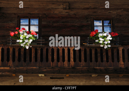 Window boxes with geraniums on the balcony of a farmhouse, Alto Adige, South Tyrol, Italy - Stock Photo
