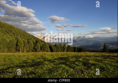Alp meadow in the mountains, Alto Adige, UNESCO World Nature Site, South Tyrol, Italy - Stock Photo