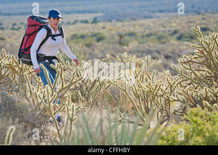 A hiker negotiates cacti on the trail, Red Rock Canyon National Conservation Area, Nevada, USA. - Stock Photo