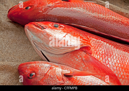 Closeup of three red snapper fish for sale by the seaside on the beach in Zihuatanejo, Mexico - Stock Photo