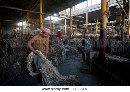 Migrant workers from Bihar turn raw jute (left) into bolts of golden fiber inside the Hastings Jute Mill. - Stock Photo