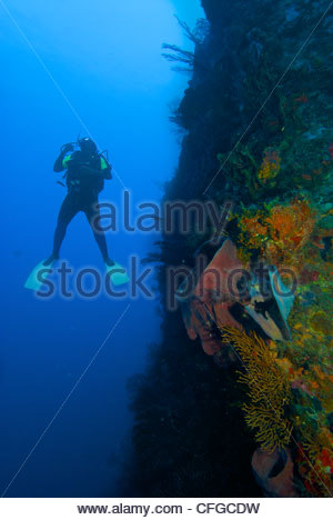 A scuba diver looks up a wall in Scott's Head Marine Reserve. - Stock Photo