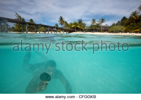 A diver brings up a black pearl oyster at a pearl farm. - Stock Photo