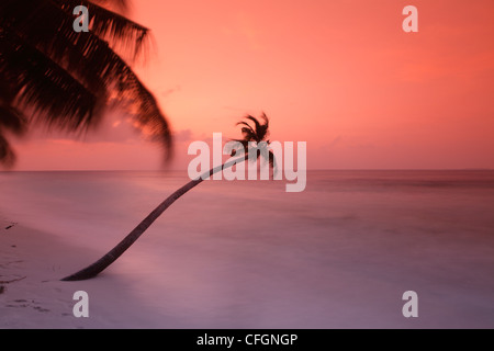 Palm on the beach at sunset, Filitheyo island, Maldives - Stock Photo