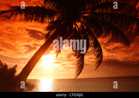 Palm on the beach at sunset, Filitheyo island, Maldives - Stock Photo