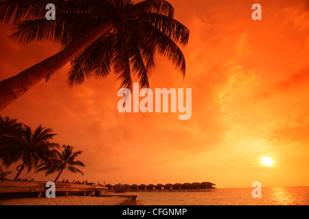 Palms at sunset at Filitheyo island, Maldives - Stock Photo