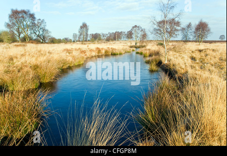 Grassland with Womere pool in mid-winter Cannock Chase Country Park AONB (area of outstanding natural beauty)  Staffordshire - Stock Photo