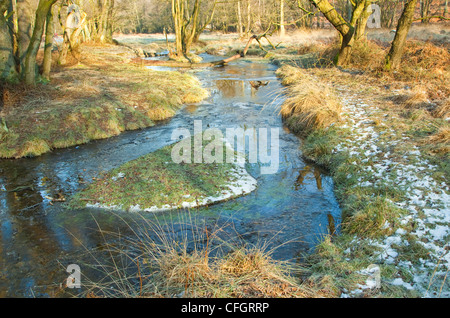 Severe frost in mid-winter, Sherbrook Valley, Cannock Chase Country Park AONB (area of outstanding natural beauty) - Stock Photo