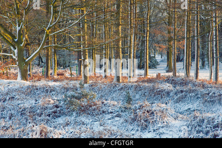 Severe frost in mid-winter Cannock Chase AONB (area of outstanding natural beauty) in Staffordshire England UK - Stock Photo