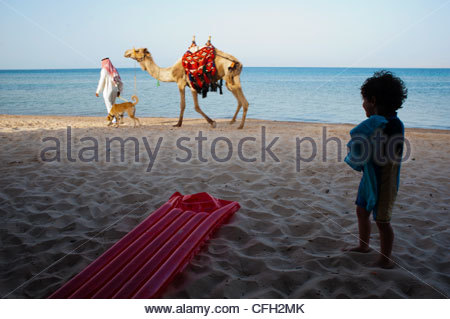 A boy watches a camel and dog walk on the beach. - Stock Photo