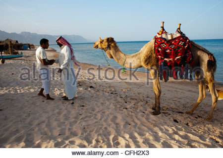Men with a camel on a beach. - Stock Photo