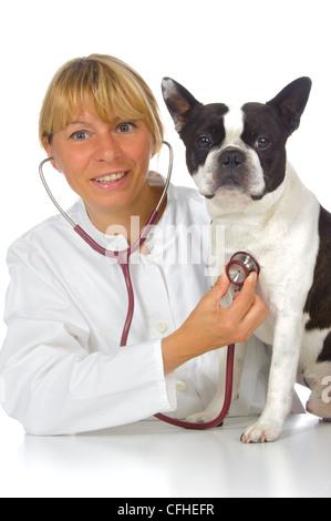 female vet doctor with dog boston terrier - Stock Photo