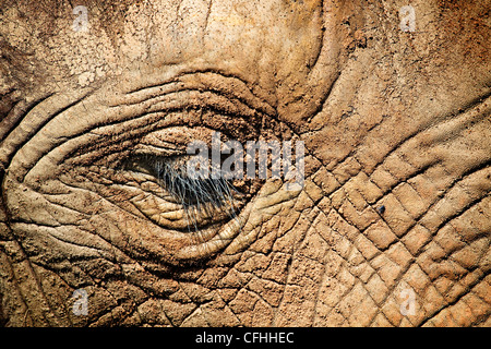 African elephant close up of face, Cabarceno, Spain - Stock Photo