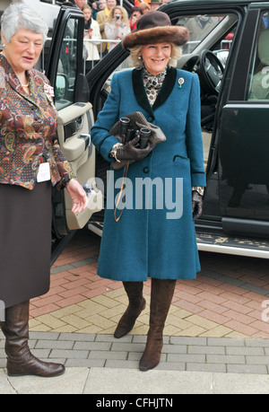 Camilla Duchess of Cornwall  at Day Two of the Cheltenham Gold Cup Festival Cheltenham Racecourse Glos - Stock Photo