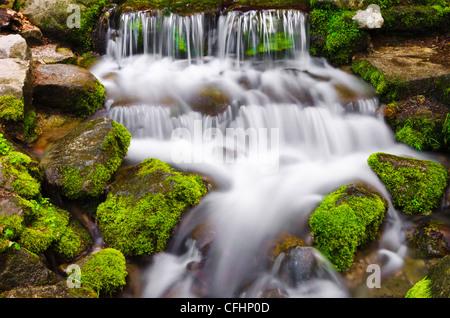 Fern Spring, Yosemite National Park, California USA - Stock Photo