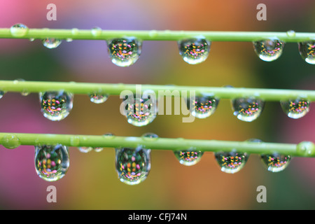 Green leaves with drops - Stock Photo