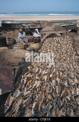Women drying sardines on the beach Ile Saint Louis Senegal - Stock Photo