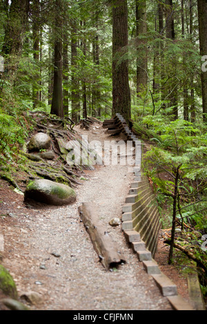 A hiking trail through Lynn Valley in Vancouver, British Columbia. - Stock Photo