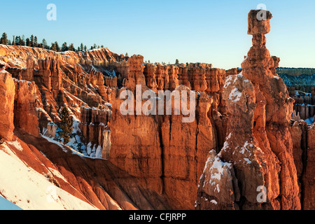 Reflective first light illuminates the hoodoos including Thor's Hammer in Utah's Bryce Canyon National Park. - Stock Photo