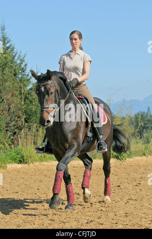 Dressage rider on back of a German horse trotting - Stock Photo