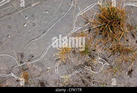Ice patterns in frozen puddle Wales, UK - Stock Photo