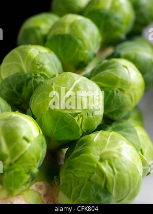 Brussels sprouts tree - Stock Photo