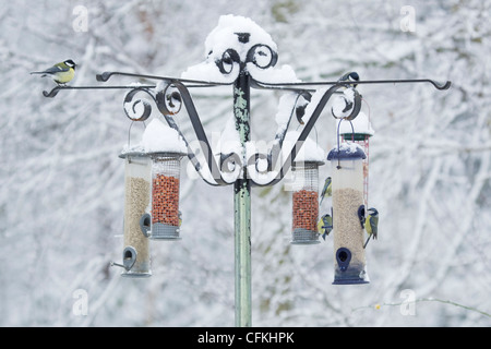 Birds on feeder in winter woodland with snow Brentwood Essex, UK BI022004 - Stock Photo