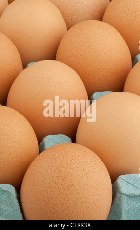 A tray of large brown hen's eggs - Stock Photo