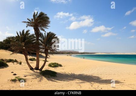 Palm trees and view along the beautiful long sandy beach. Praia de Chaves, Rabil, Boa Vista, Cape Verde Islands. - Stock Photo